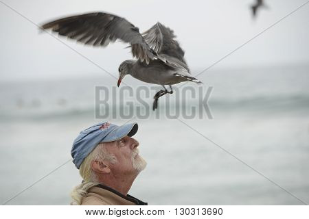 Los Angeles, Usa - August 3, 2014 - Seagull Landing On A Man Head
