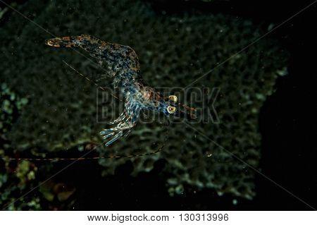 Shrimp On The Black Backgorund In Indonesia