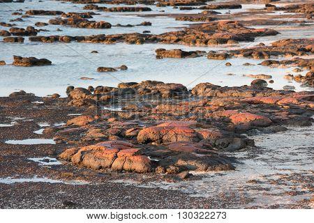 Stromatolites Black Rocks Beach In Shark Bay