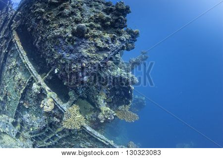 Umbria Ship Wreck In Red Sea