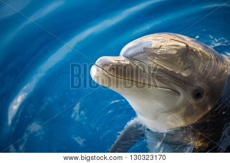 Dolphing Smiling Close Up Portrait