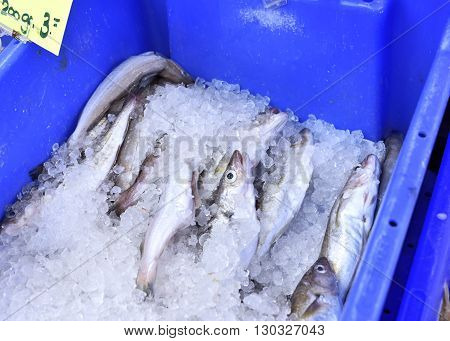 Fresh fish on a fish market cooled with crushed ice. Fresh hake in a blue box, close-up shot.