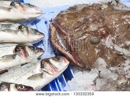 Sea basses and catfish on ice. Variation of fresh fish on a fish market stall.
