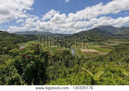 Hawaii Kauai Fields
