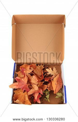 Abstract Color Leaves In The Box