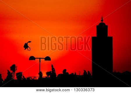 Maroc Marrakech Sunset View With A Stork Silhouette