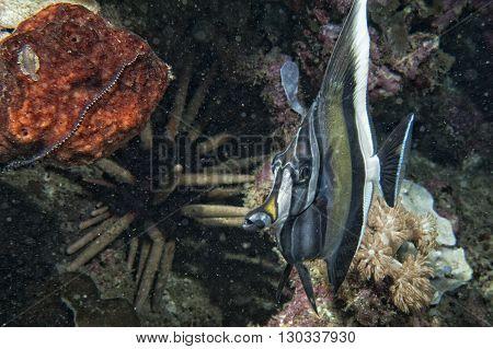 Angel Fish Looking At You