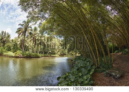 Inside Tropical Rainforest In Hawaii Set Of Pirates Of Caribbean