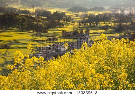 Spring fresh landscape of colorful fields, sunrise sky and beautiful hills valley