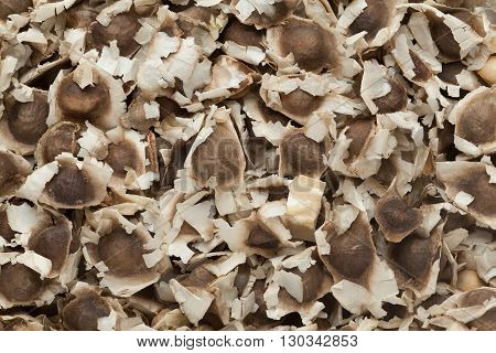 Organic Dried Moringa (Moringa oleifera) Seeds. Macro close up background texture. Top view.