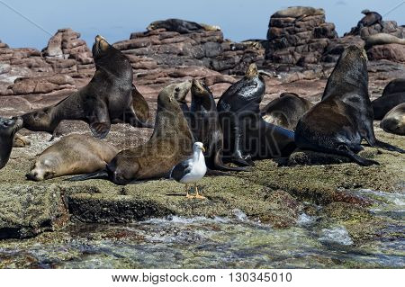Sea Lion Seals Relaxing