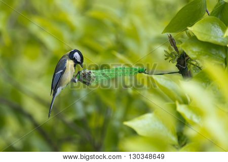 A Blue Tilt Bird While Eating