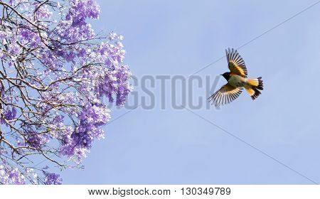 Tree in full purple blossom and bird on sunny day in spring panoramic view