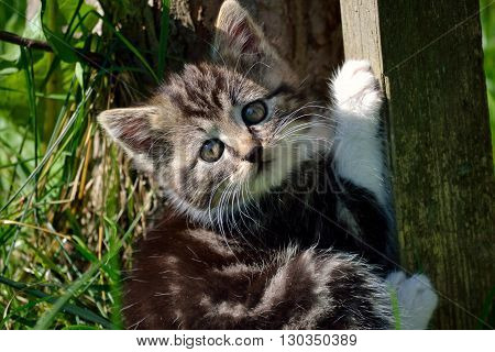 little kitten playing in the garden and look in the camera