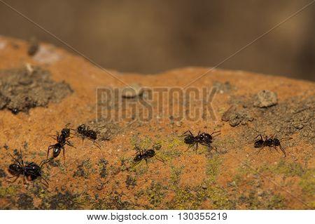 Black Ants Running On Soil Orange Background