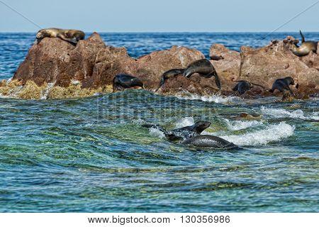 los islotes mexico espiritu santu island sea lion retreat