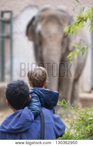 Children At The Zoo