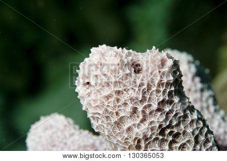 Hard Coral Macro Detail