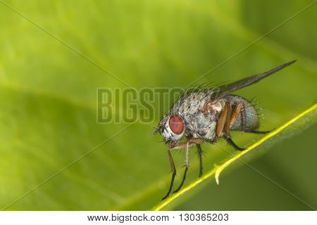 isolated fly on the green background close up macro