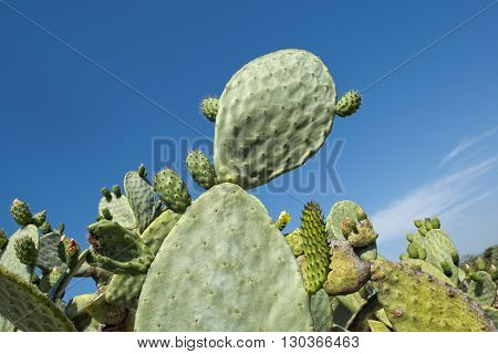 Cactus Thorn Macro Detail