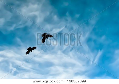 Two Crow Silhouette In The Painted Blue Mountain Sky