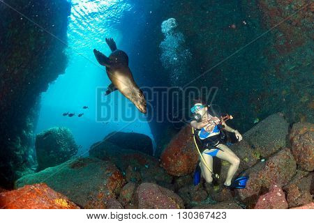 Beaytiful Latina Diver Playing With Sea Lion Underwater