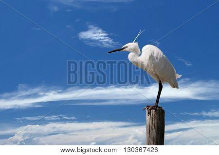 White Egret Heron On The Blue Sky Background