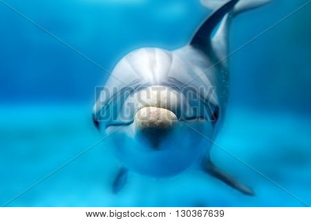 Dolphin Smiling Eye Close Up Portrait