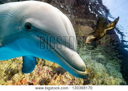 Dolphin And Sea Lion Underwater