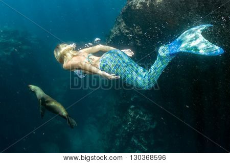 Sea Lion And Mermaid Underwater