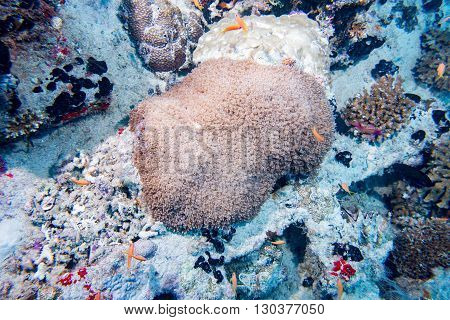 Hard Coral Macro On Night Dive Light