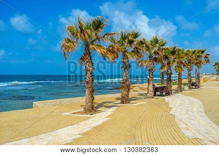 The green palms decorate the seaside promenade of Acre Israel.