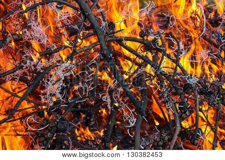 picture of a burning branches of a trees in the park