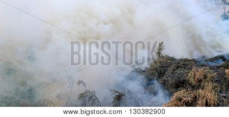 smoke running out from a burning branches