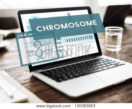 Chromosome Anatomy Biochemistry Science Concept