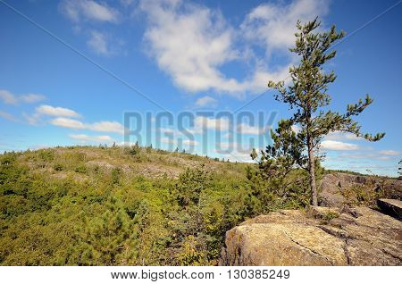 View from Ely's Peak Near Duluth with Pine Tree