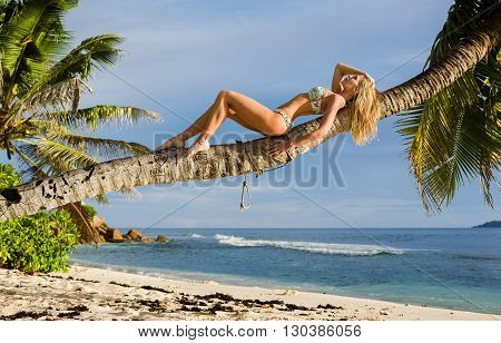 Sexy beautiful blonde woman lays on trunk of palm tree