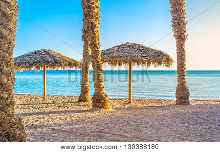 The scenic straw sunshades on the beach among the palm trunks Eilat Israel.