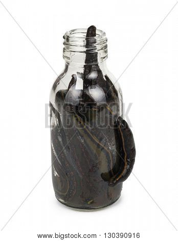 Medical leeches in a glass bottle