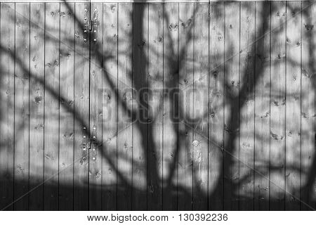 Shade of a tree on a wooden garage door. Beautiful background.