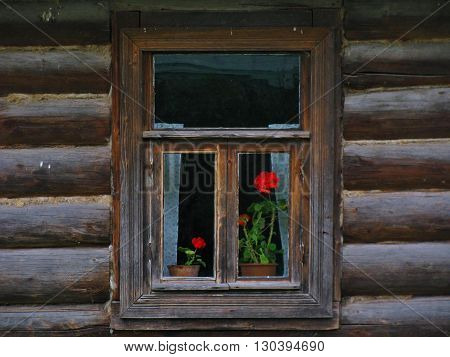 Window with red flowers in woof house.