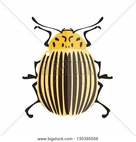 Potato bug. Vector illustration of a colorado potato beetle. Isolated on a white background.