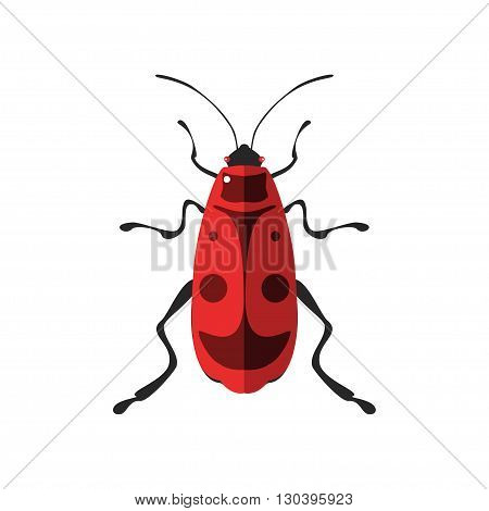 Vector illustration of a firebug. Isolated on a white background.