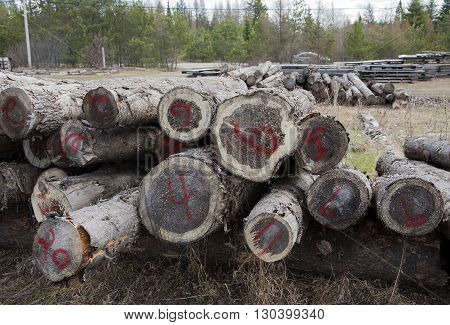 Logs ready for processing out in the country