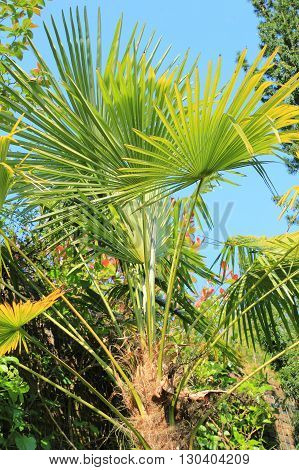 Beautiful palm trees in the spring garden