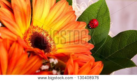Small Red Ladybug On Leaf Next To Gerbera Bloom