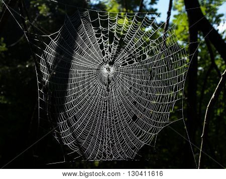 A dew covered spiders web in the forest.