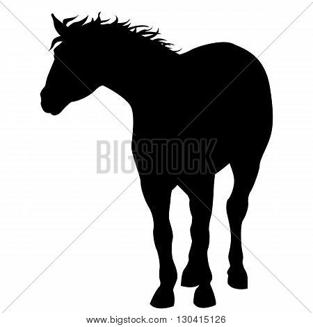 Black horse stand silhouette isolated vector illustration