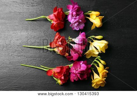 Beautiful freesia flowers on black wooden background