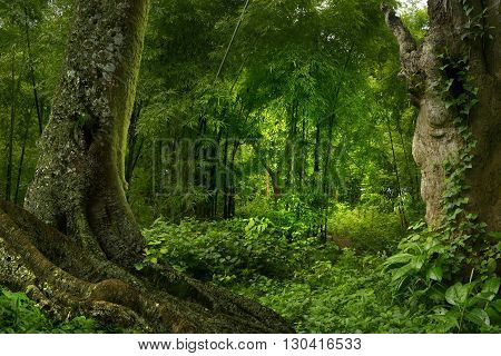 Tropical jungle in Thailand with tree and falls
